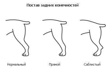 кости и суставы в рентгеновском изображении pdf